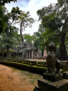 blog-voyage-parfums-de-liberte-julie-et-leo-temples-d-angkor-nature-lion