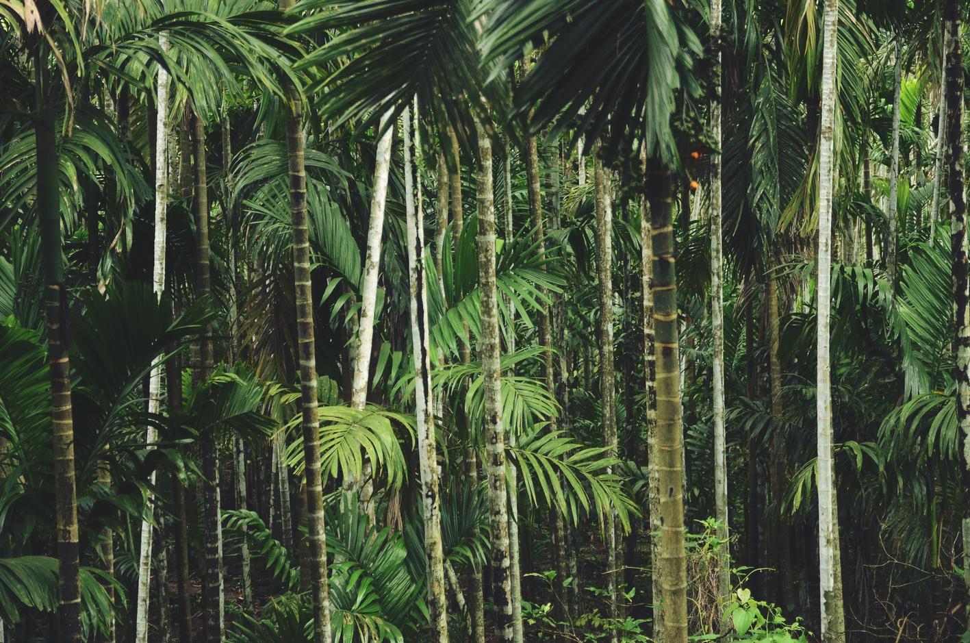 blog-voyage-couple-parfums-de-liberte-leo-et-julie-petit-budget-jungle-thailandaise-home