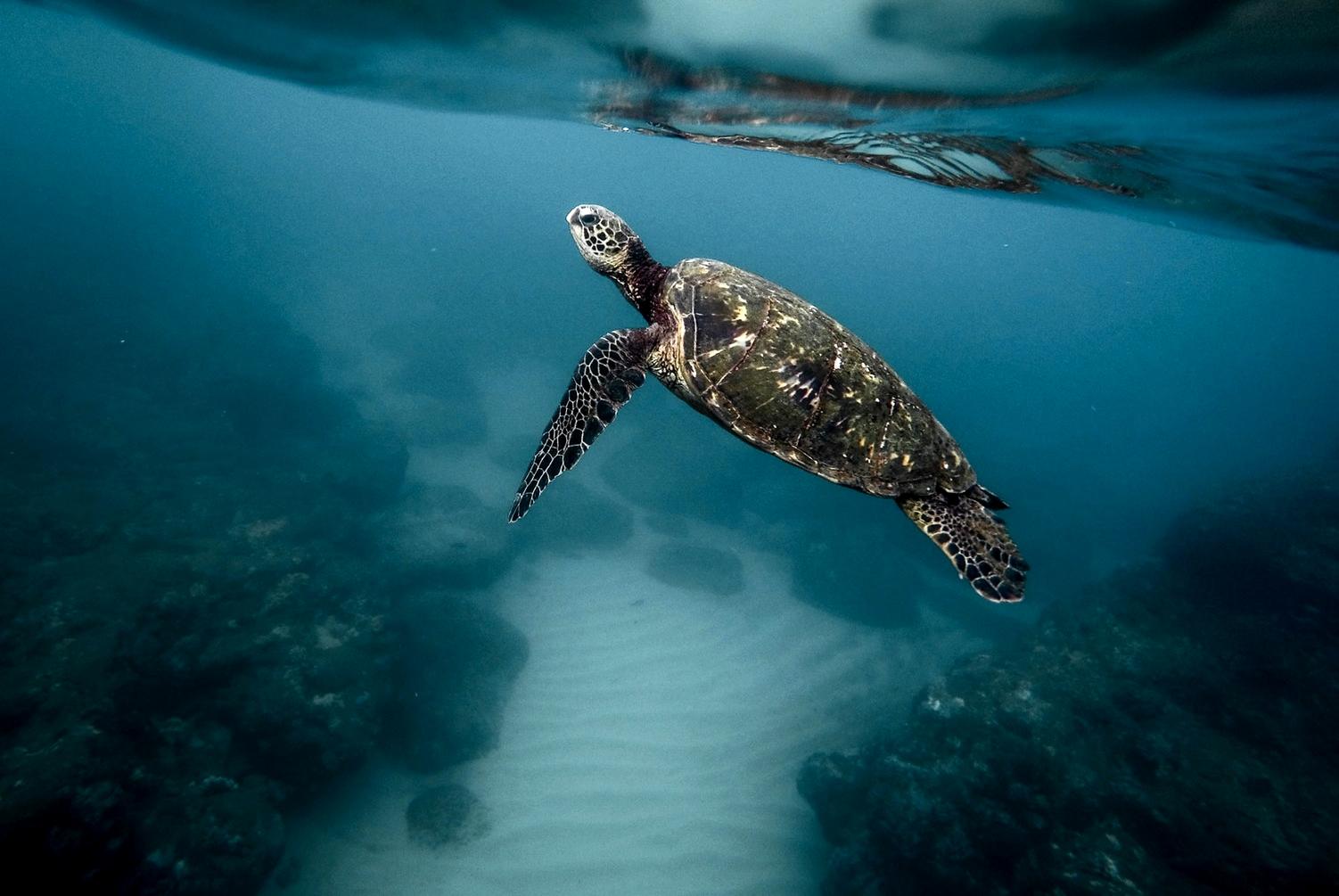 blog-voyage-couple-parfums-de-liberte-leo-et-julie-petit-budget-sri-lanka-polhena-beach-tortue-turtle-home-mirissa-baleines